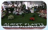 Fiere Albert Plants